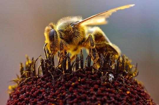 Χωρίς μέλισσες, δεν υπάρχει ζωή, ΜΕΛΙΣΣΕΣ, ΕΝΤΟΜΑ, MELISSES, ENTOMA, ΜΕΛΙ, HONEY, nikosonline.gr