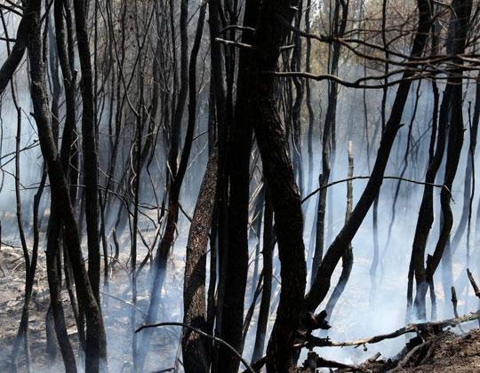 Η ταυτότητα της ημέρας, Πυρκαγιές στην Ελλάδα, Greece wildfire, ΤΟ BLOG ΤΟΥ ΝΙΚΟΥ ΜΟΥΡΑΤΙΔΗ, nikosonline.gr