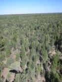 Erstmal nur Wald...