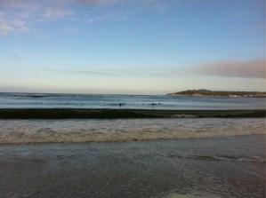 Delphine am Strand von Carmel