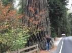 Viel Baum