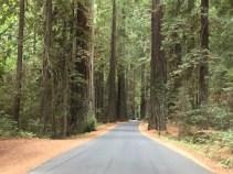 Weg zur Big Tree Area