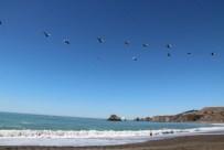 Pelikane überm Wasser