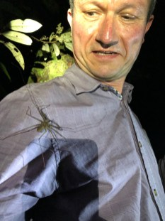 ... harmlose Spinnen ...