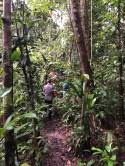 Durch den morgendlichen Dschungel