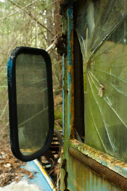 Nina Marquardsen Photography, Beetle Graveyard