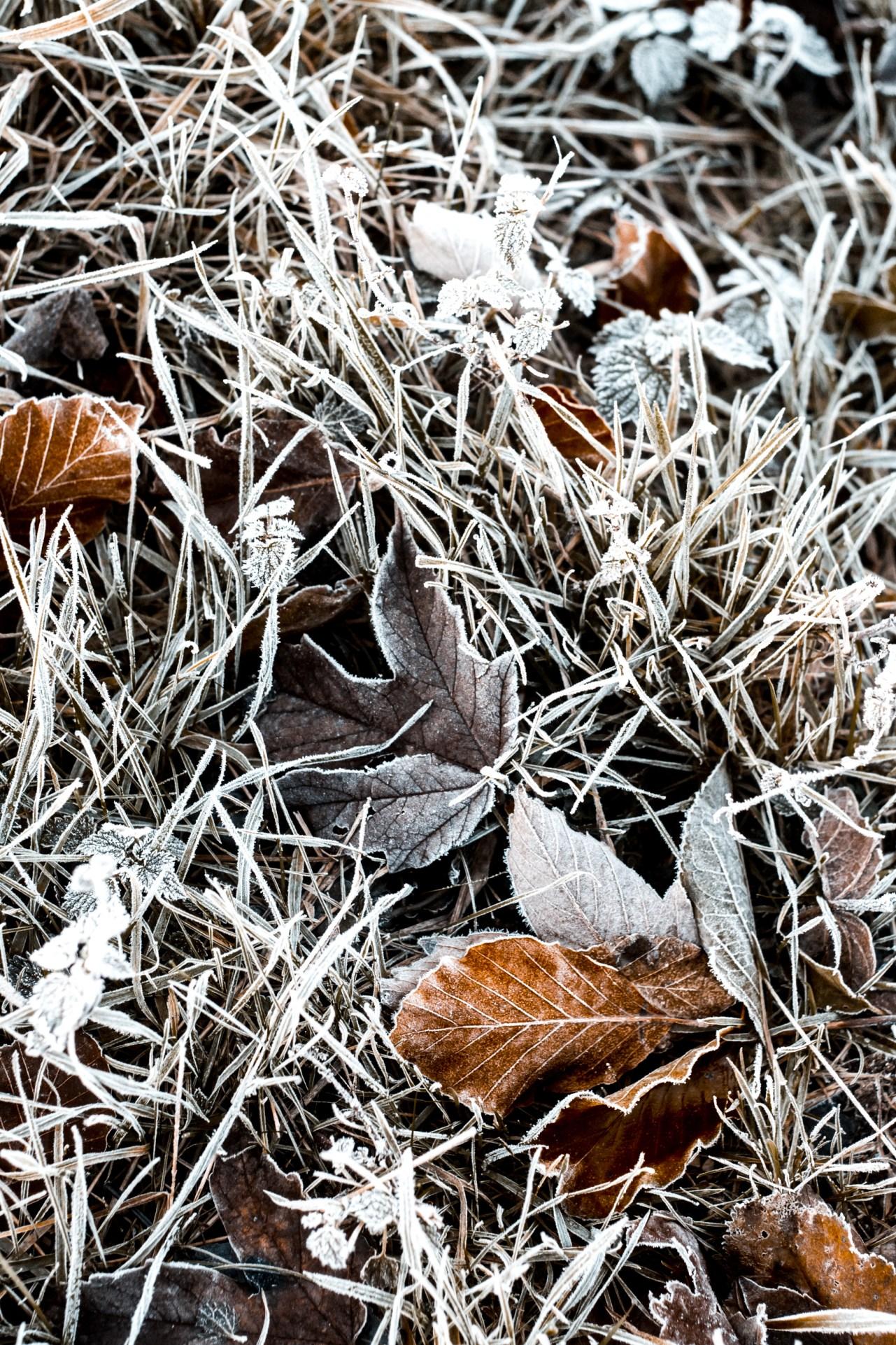 Nina Marquardsen Frost Fotografi