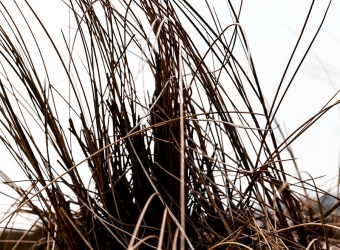 Hornbæk strand – fotografier