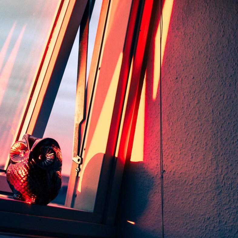Nina Marquardsen fotografi - owl face