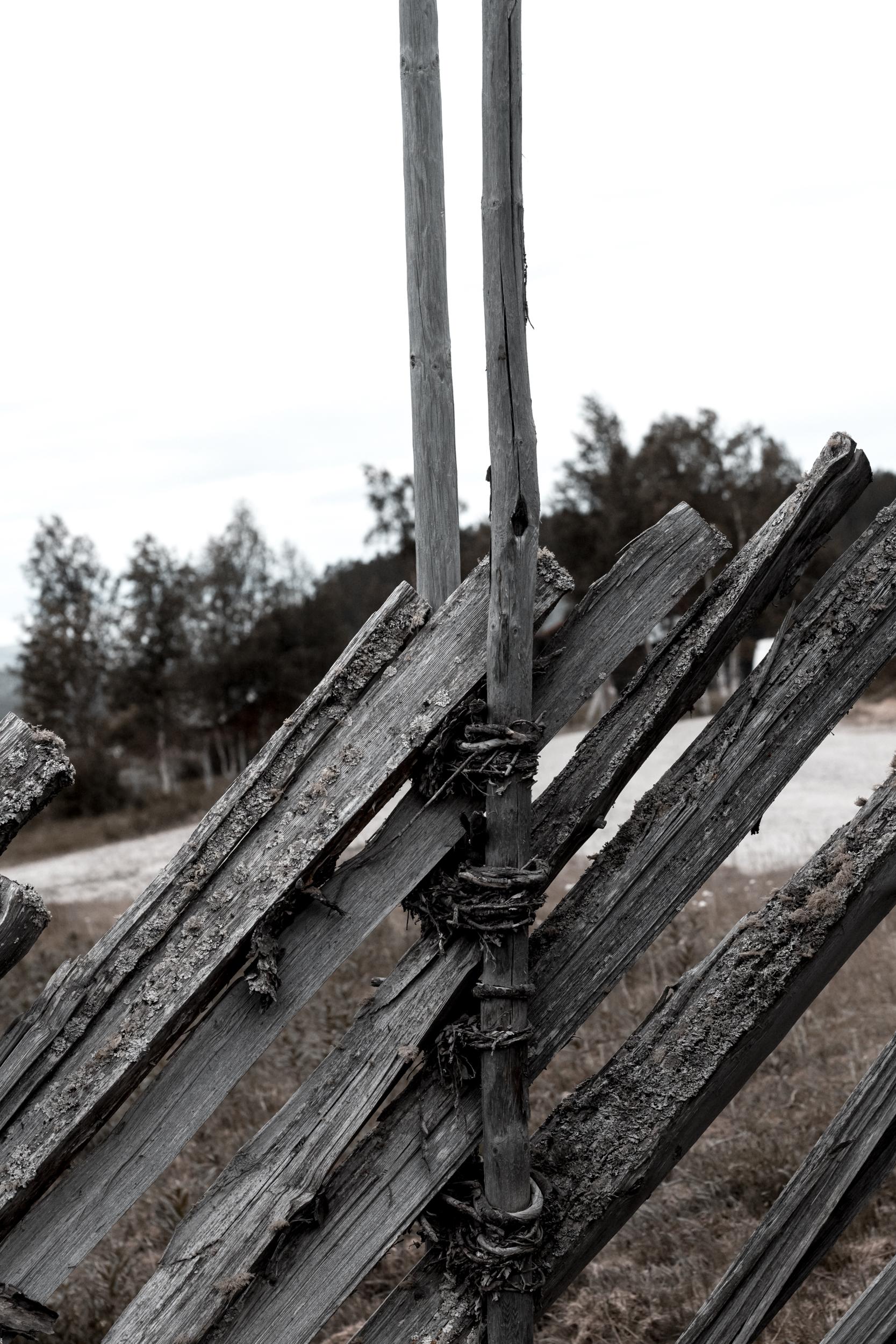 Træ og træstruktur