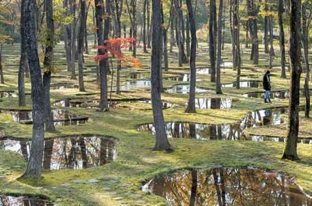 Watergarden af Junya Ishigami