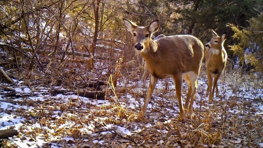 2 Deer  RAW ADJ