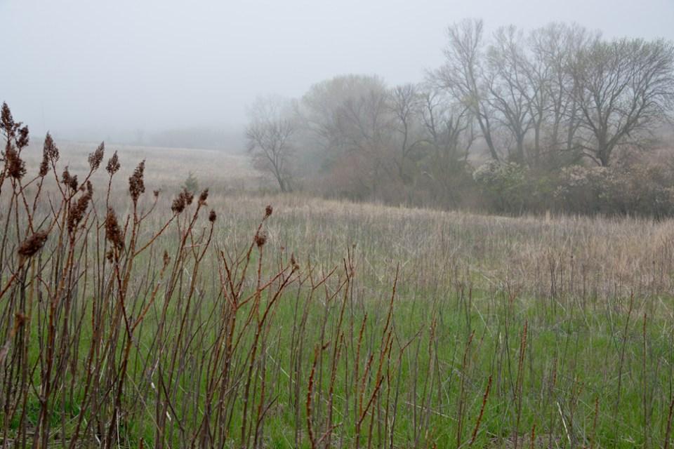 Dense Fog Morning 2