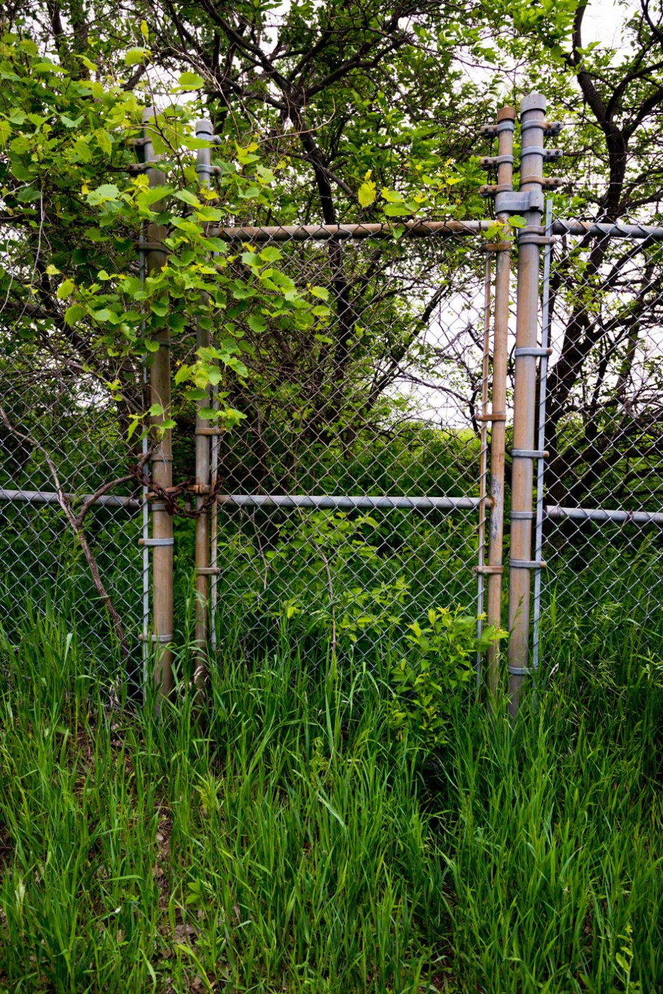 Little-Game-Trail-through-an-Unused-Gate