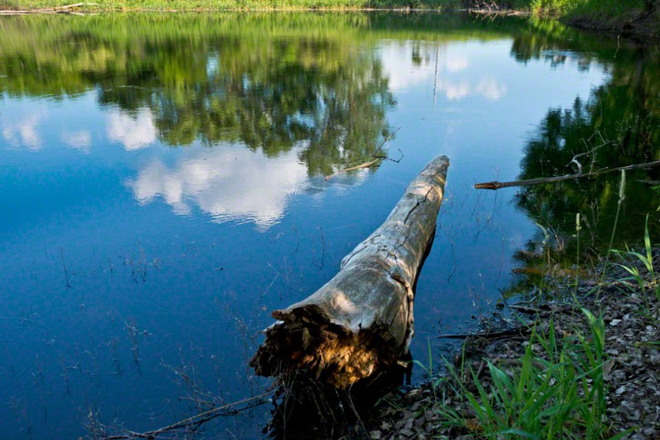 Log-at-the-Edge-of-the-Big-Pond