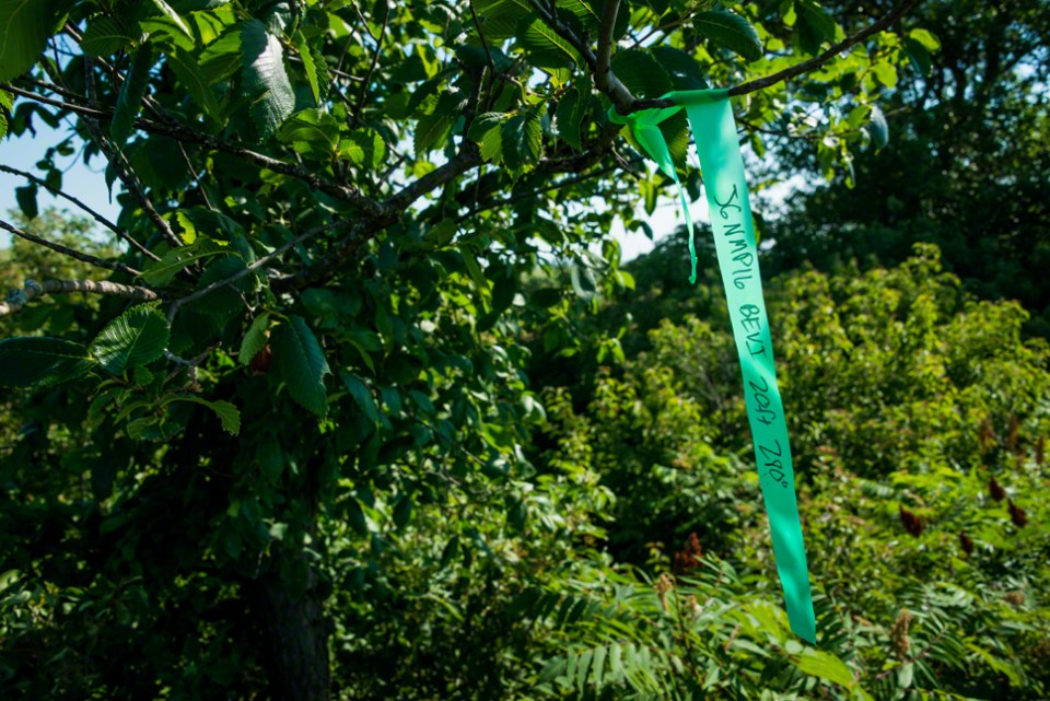 Researcher's Hanging Green Tape