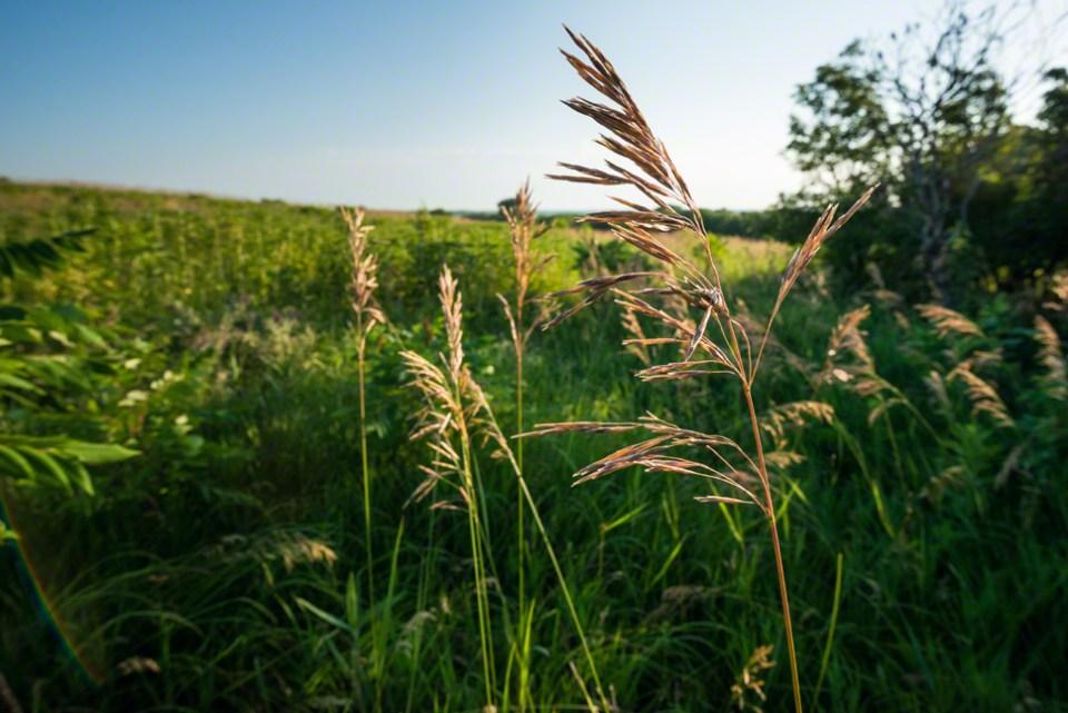 Sidelit Grass Head