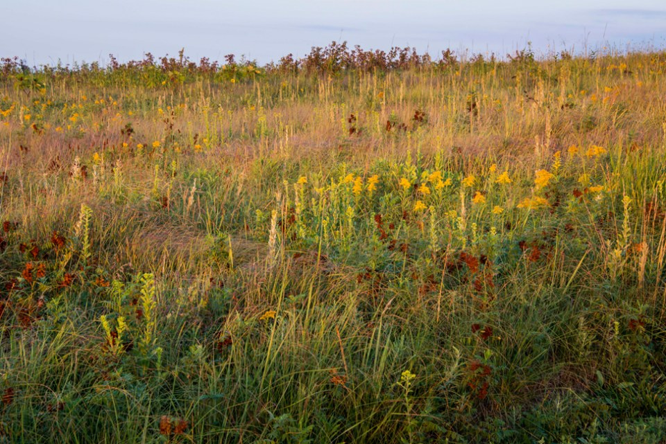 A Prairie Hillside in Mid-August