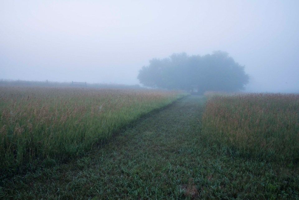 Entry Path on a Foggy August Morning