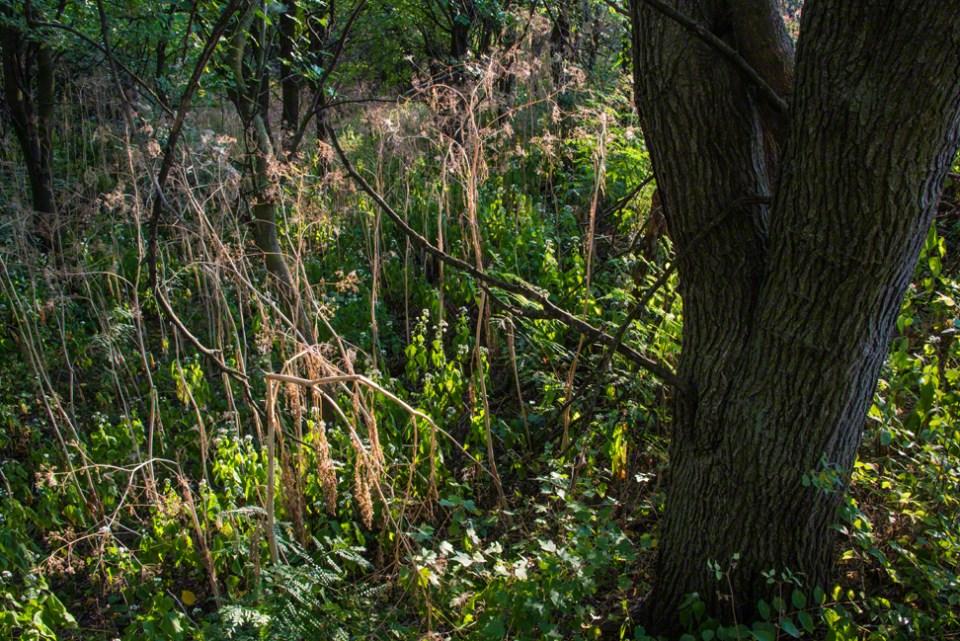 Hemlock Remnants