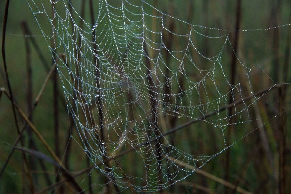 Spider Web in the Wet Fog - CU