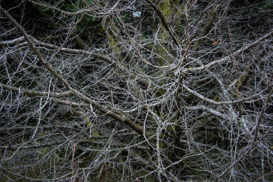 Dead Branch Tangle