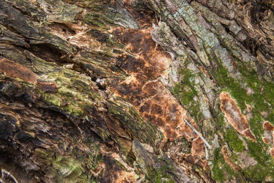 Down Tree Bark CU