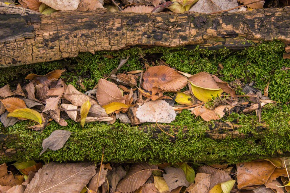 Fall Leaves on a Bed of Moss