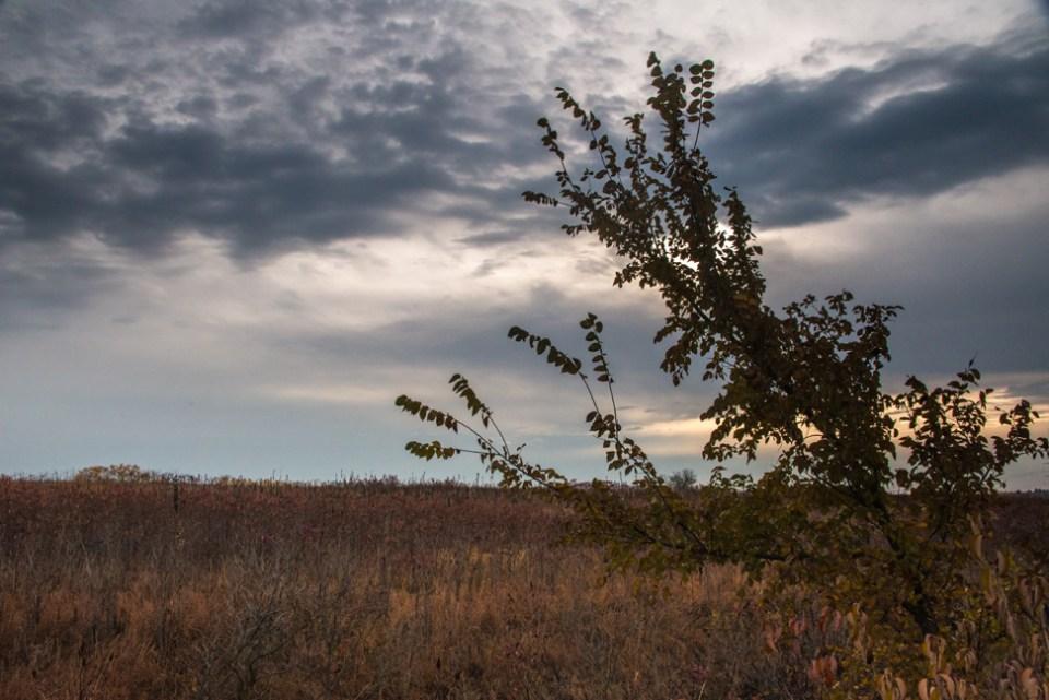 Lone Bush Against a Rugged Sky
