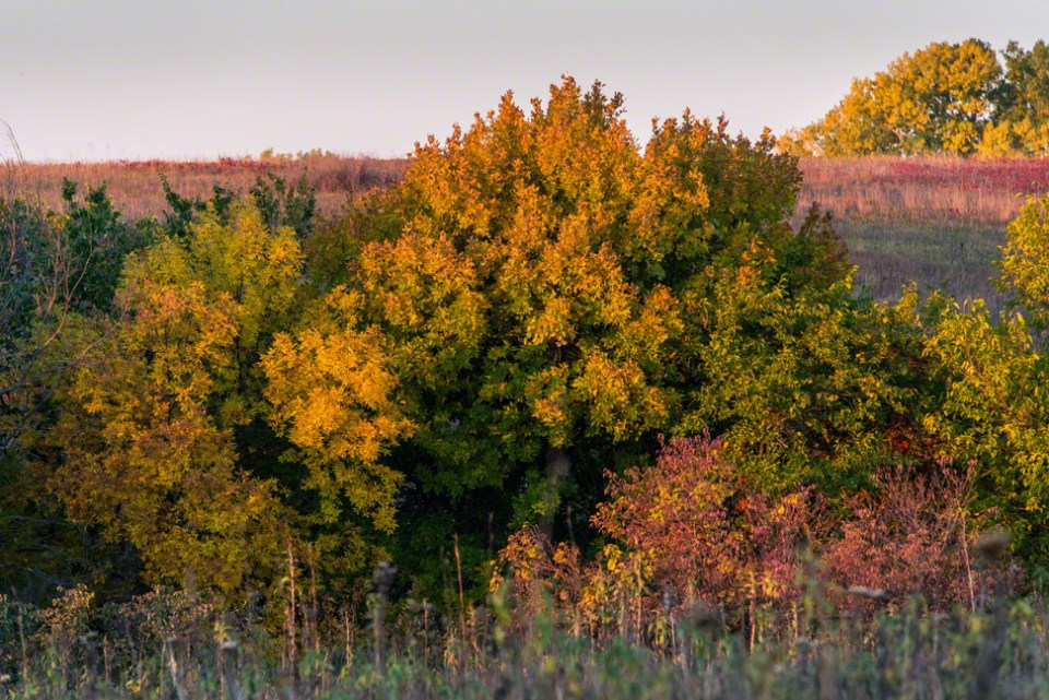 Long Lens Fall Color Spritz at Dawn