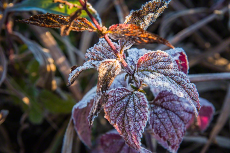 Not Quite a Hard Frost