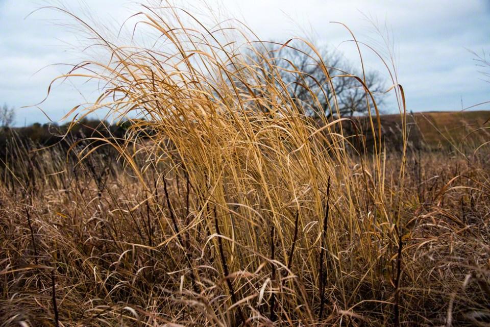 Shock of Dry Grass