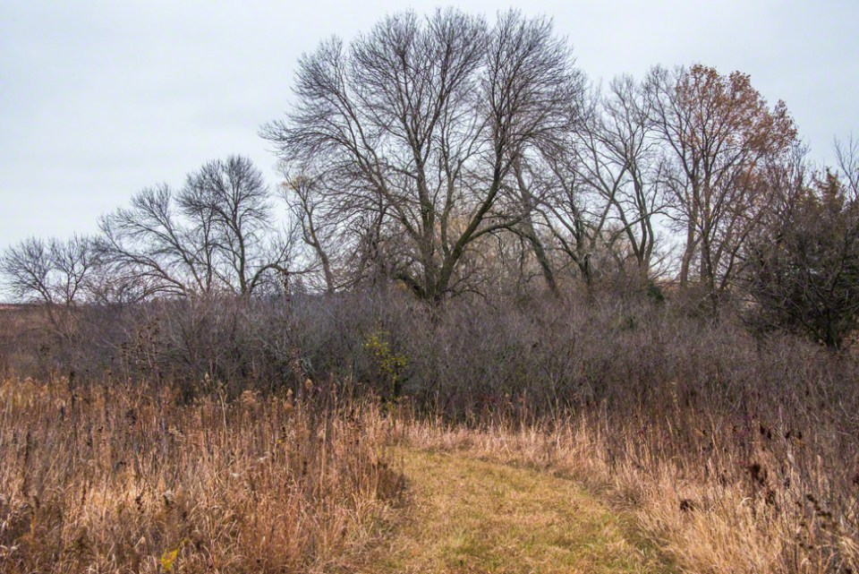 The Bare Trees of the First Draw and the Path Nearby