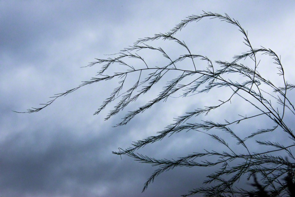 Tracery Against a Roiling Sky