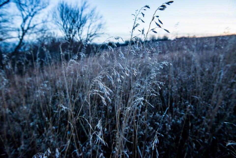 Twilight on Grass Heads