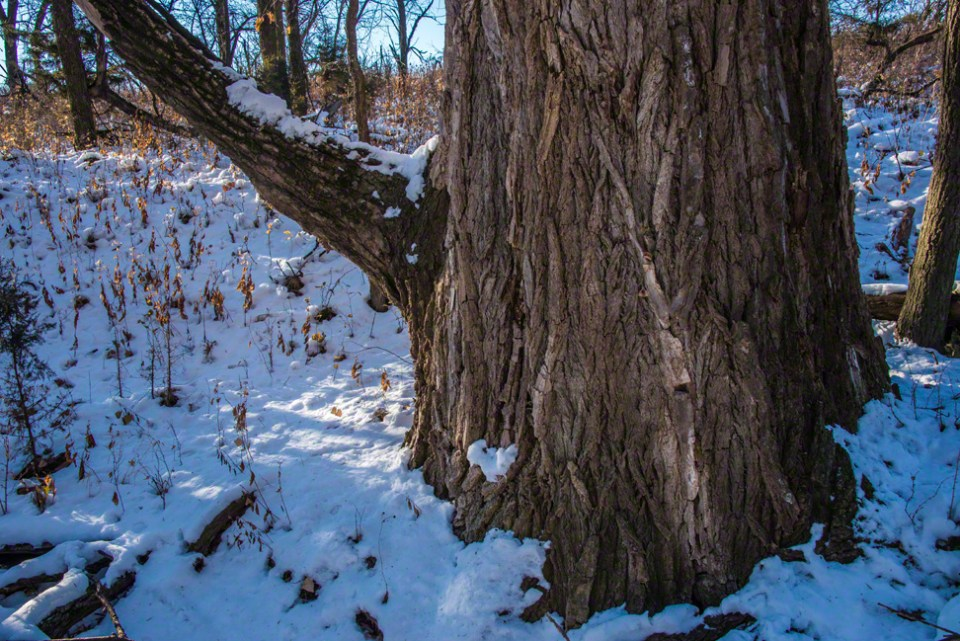 At the Base of Grandmother Cottonwood