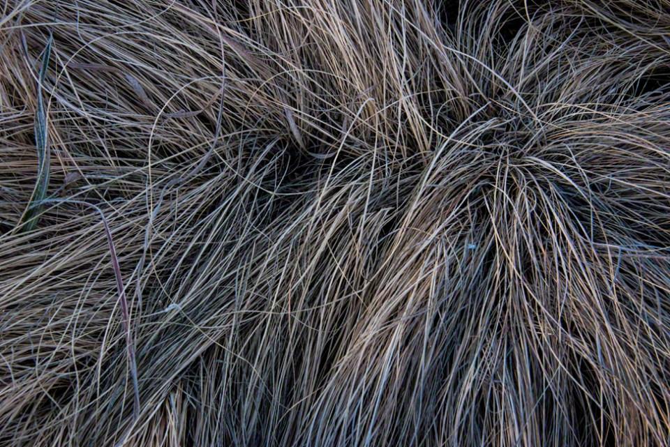 Grassy Cowlick