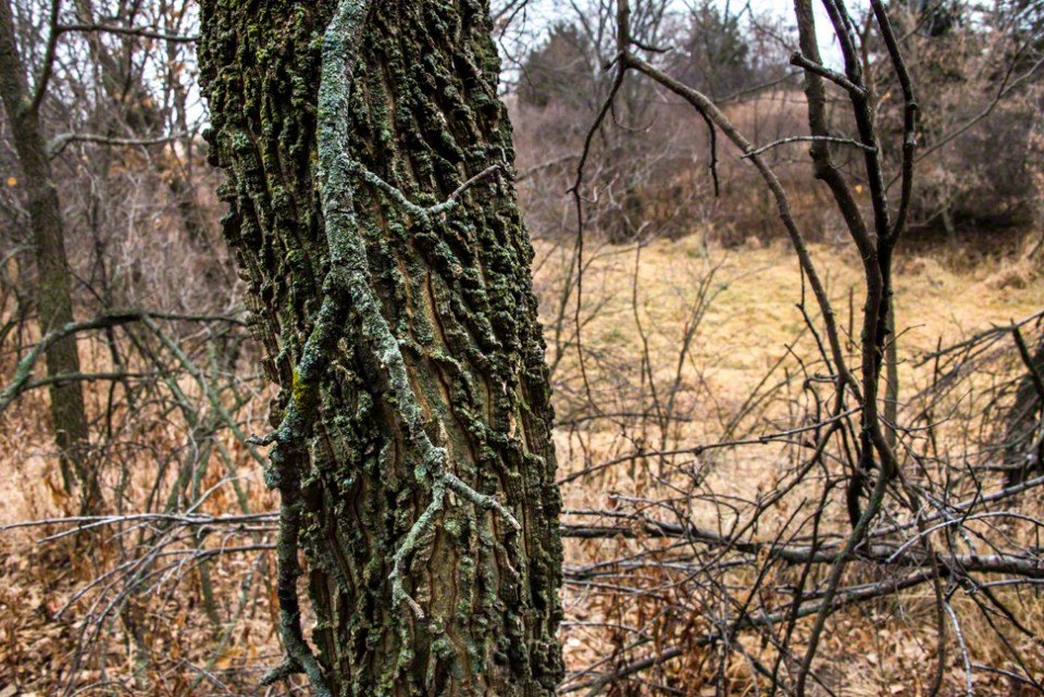 Hanging Twig with Green Moss
