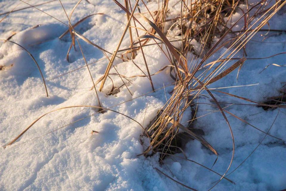 Snow Knocks Down Grass