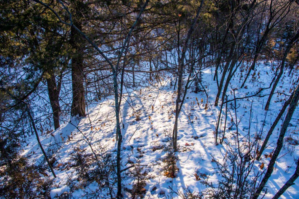 Sunlight Filtered Through Trees Onto Snow on the Draw Hillside