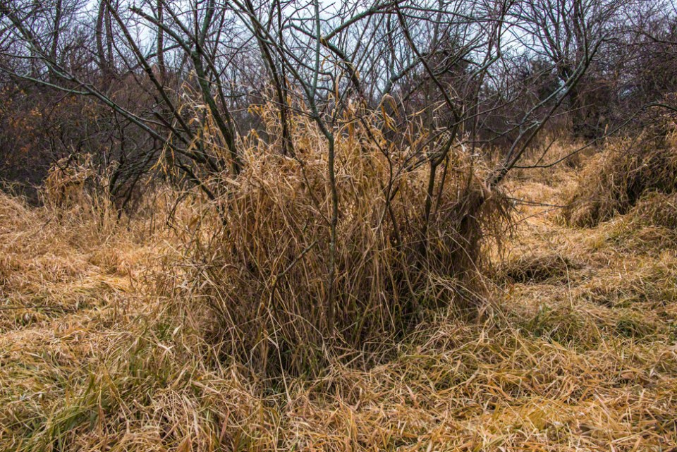 Woody Plants Support Dead Grass