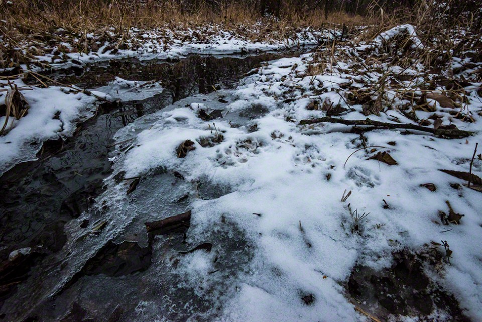 Critter Tracks in Snow at Water 2