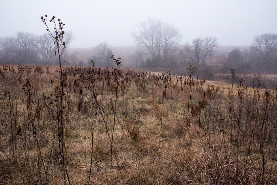 Foggy Morning 5 - Sunflower Heads Wide