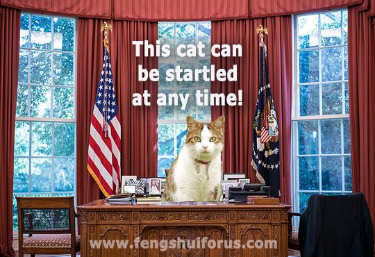 president-cat