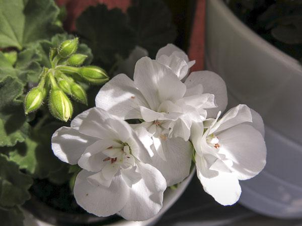flowers2013_28