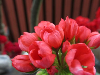 flowers2013_31