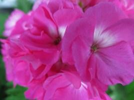 flowers2013_39