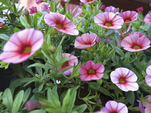 flowers2013_49