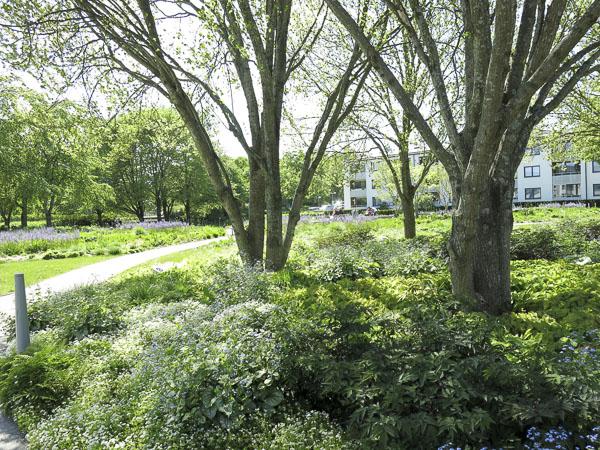Skärholmen perennial park