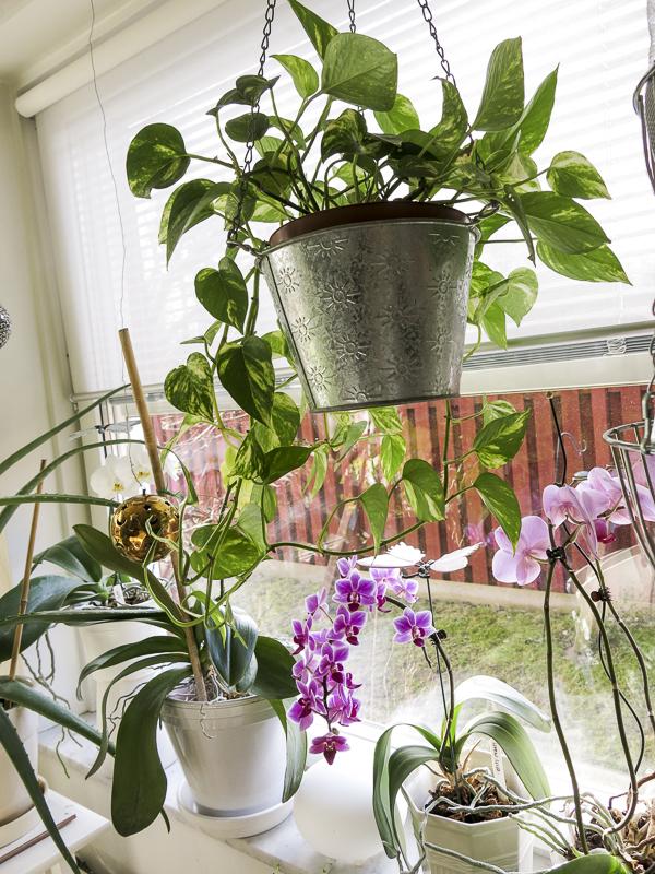 hanging_plant